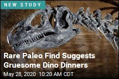 Some Dinosaurs Resorted to Cannibalism