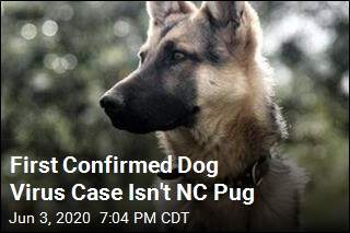 First Confirmed Dog Virus Case Isn't NC Pug