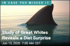 Familiar Image of Great Whites May Be Misleading
