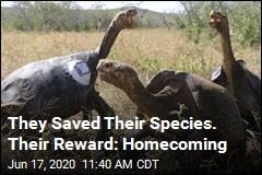They Saved Their Species. Their Reward: Homecoming