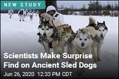 Humans and Sled Dogs: a 10,000-Year History