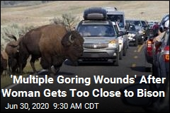 Woman Gave the Bison 10 Feet. It Wasn't Enough