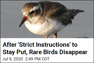 After 'Strict Instructions' to Stay Put, Rare Birds Disappear