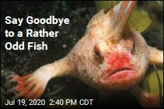 Say Goodbye to a Rather Odd Fish