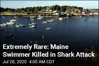 Extremely Rare: Maine Swimmer Killed in Shark Attack