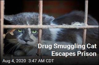 Drug Smuggling Cat Escapes Detainment