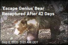 'Europe's Most Wanted Bear' Recaptured