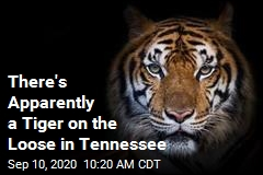 Tennessee Authorities Trying to Catch a Cat*