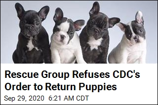 Rescue Group Refuses CDC Order to Return Puppies