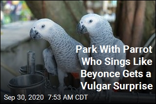 Potty-Mouthed Parrots Cause Ruckus at Wildlife Park