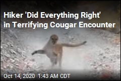 Hiker Shares Video of Terrifying Cougar Encounter