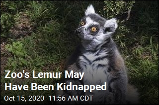 Zoo's Lemur May Have Been Kidnapped