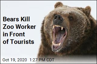 Bears Kill Zoo Worker in Front of Tourists