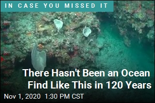 There Hasn't Been an Ocean Find Like This in 120 Years
