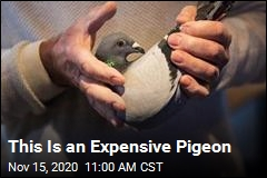 This Is an Expensive Pigeon