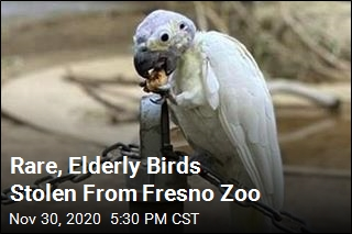 Rare, Elderly Birds Stolen From Fresno Zoo