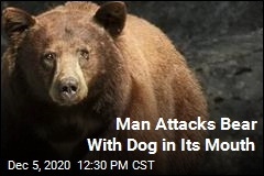 Man Attacks Bear With Dog in Its Mouth