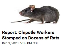 Rats Reportedly Commandeer an NYC Chipotle