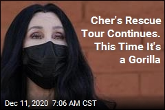 Cher's Rescue Tour Continues. This Time It's a Gorilla
