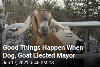 Good Things Happen When Dog, Goat Elected Mayor