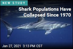 Shark Populations Have Plunged 71% Since 1970