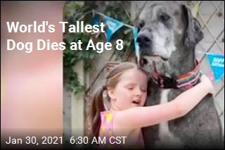 World's Tallest Dog Dies at Age 8