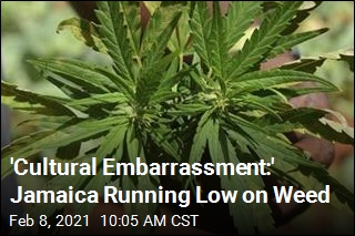 Dude! Jamaica Faces Weed Shortage