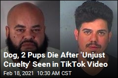 2 Arrested After TikTok Vid of Illegal C-Section on Dog