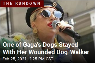 One of Gaga's Dogs Stayed With Her Wounded Dog-Walker