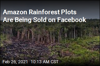 Illegally Cleared Rainforest Plots for Sale on Facebook