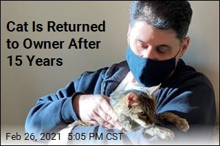 Cat Is Returned to Owner After 15 Years
