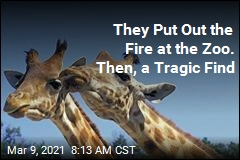 They Put Out the Fire at the Zoo. Then, a Tragic Find