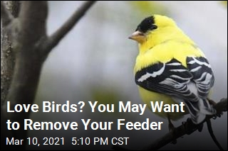 Love Birds? You May Want to Remove Your Feeder