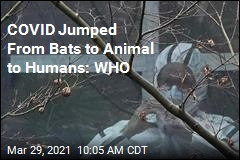 COVID Jumped to Humans From Animals: WHO