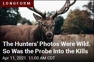 The Hunters' Kills Seemed Suspicious. The Probe Was Wild