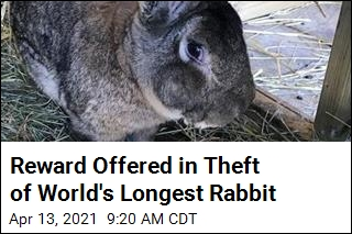 Reward Offered in Theft of World's Longest Rabbit