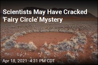 Scientists May Have Cracked 'Fairy Circle' Mystery
