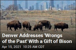 In Denver, Reparations Come in the Form of Bison