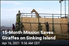 The Giraffes' Island Was Sinking. The Solution: a 'GiRaft'