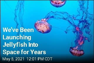 We've Been Launching Jellyfish Into Space for Years