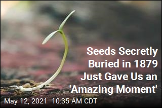 Seeds Hidden Since 1879 Are Sprouting