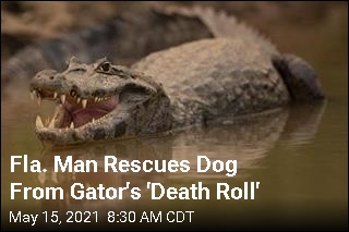 Fla. Man Rescues Dog From Gator's 'Death Roll'