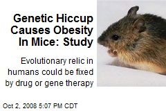Genetic Hiccup Causes Obesity In Mice: Study