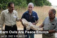 Barn Owls Are Peace Envoys