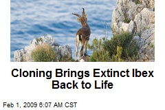 Cloning Brings Extinct Ibex Back to Life