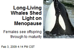 Long-Living Whales Shed Light on Menopause