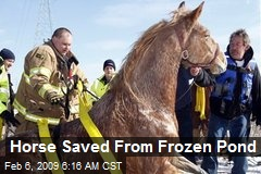 Horse Saved From Frozen Pond