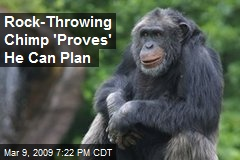 Rock-Throwing Chimp 'Proves' He Can Plan