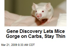 Gene Discovery Lets Mice Gorge on Carbs, Stay Thin