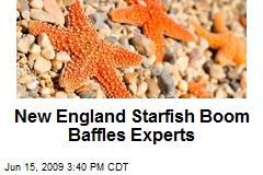 New England Starfish Boom Baffles Experts
